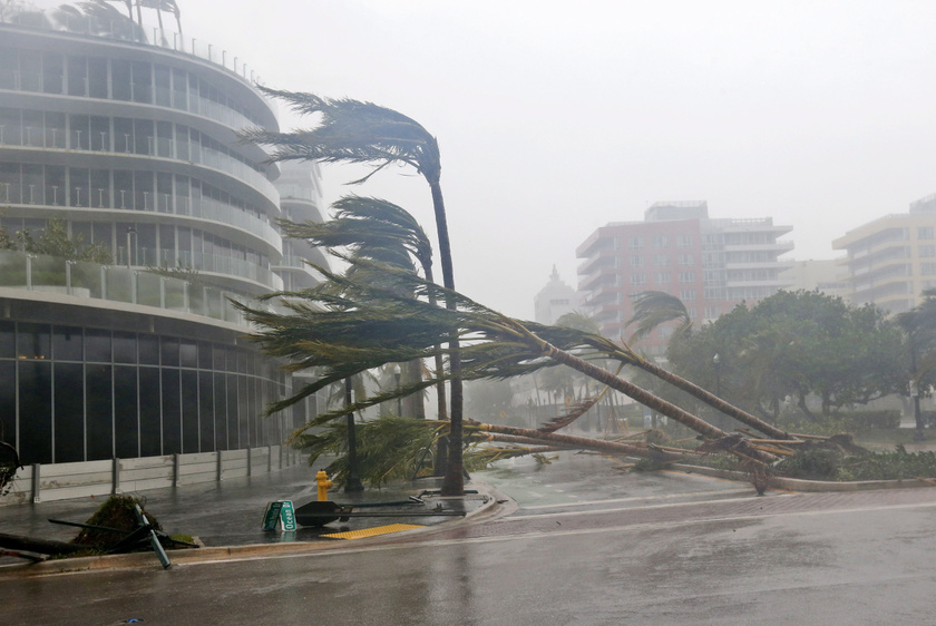 Kidőlt fák és táblák jelzik az Irma útját Miami Beach területén, az államban szükségállapotot rendeltek el.