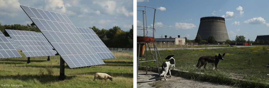 Balra: bárány legel egy napelemfarm tövében.Jobbra:Kóbor kutyák az elhagyatott csernobili erőmű közelében.