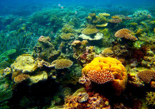 Négyszázféle korall él a Nagy-korallzátonyon.