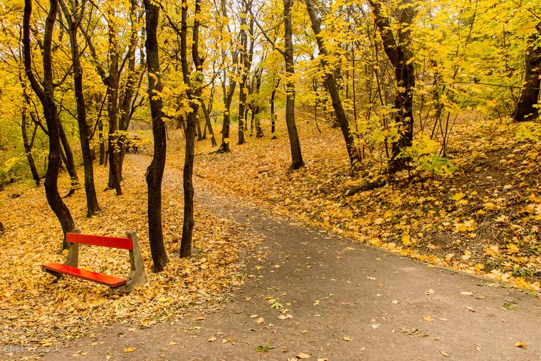Végül egy budapesti képpel búcsúzunk, mert amúgy a hazai erdőknek sincs okuk a szégyenre