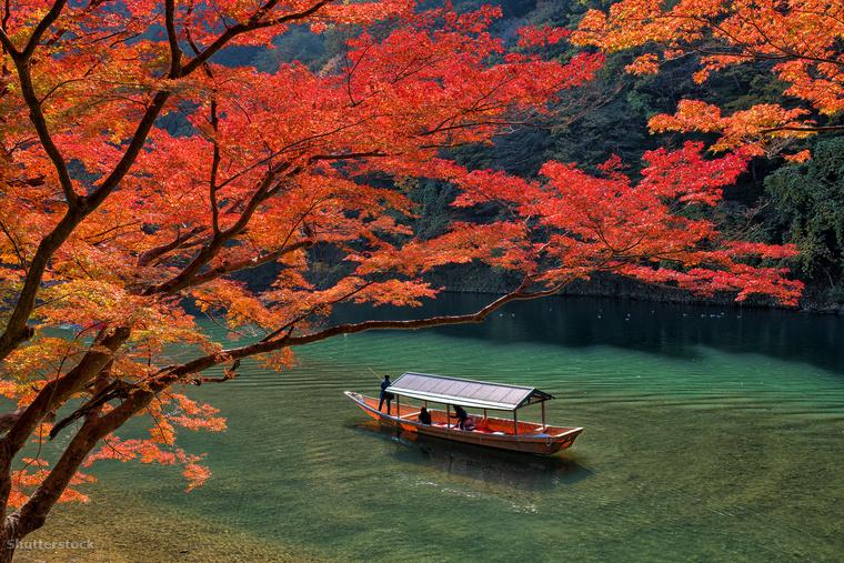 Míg Japán tavasszal a rózsaszín cseresznyevirágok lázában ég, ősszel a tűzpiros faleveleké a főszerep