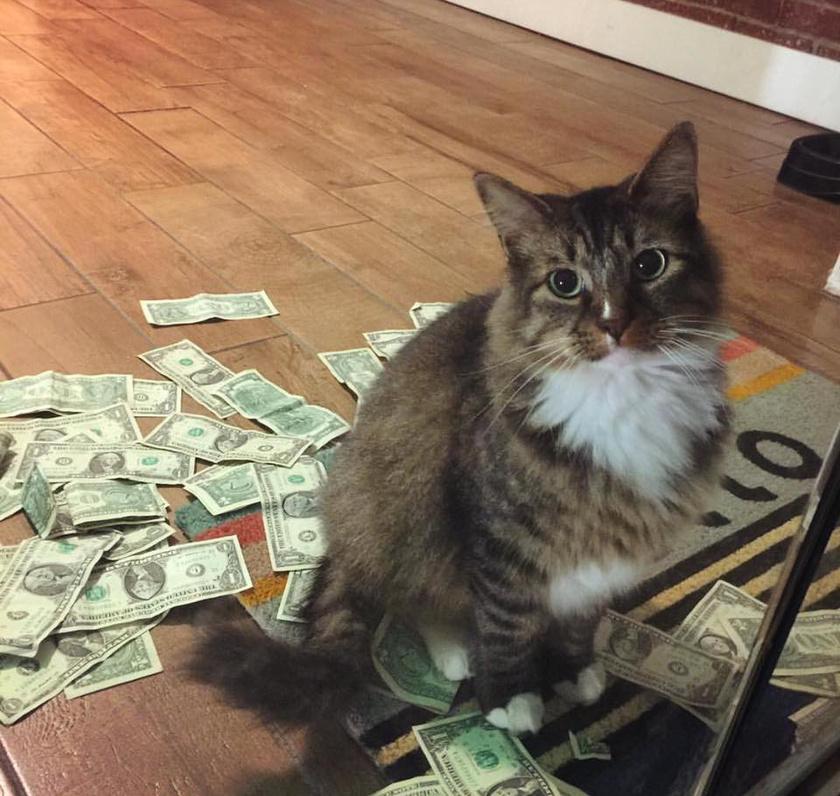cukin-nez-macska