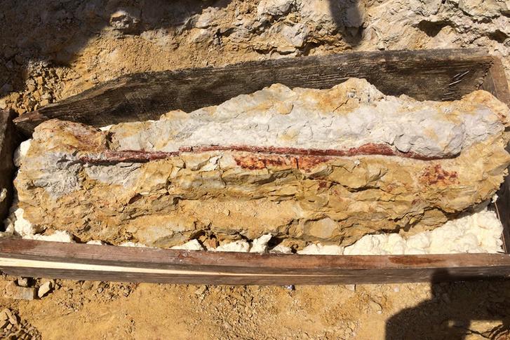 238 millió éves lelet – Nothosauria hüllő félméteres állkapcsa Villányból.