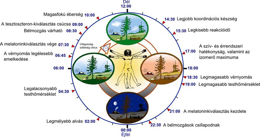 magas vérnyomás éjszakai műszak