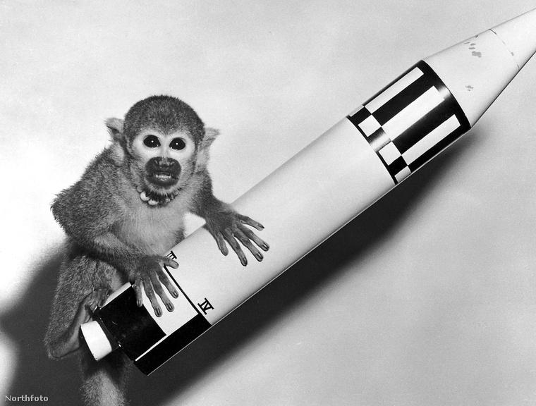 Itt Miss Baker pózol annak a rakétának a modelljén, amivel sikeres utazást tett 1959-ben.