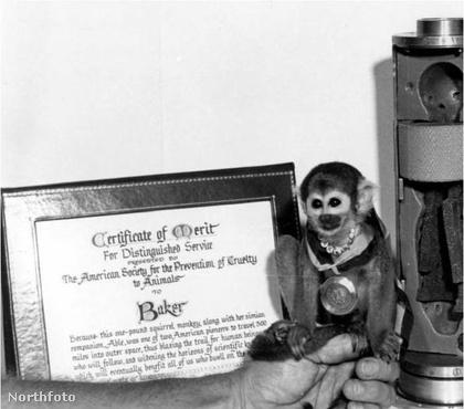 Ő volt az első majom, aki túlélte a kilövést és hazatérést, így az első űrutazó majommá vált