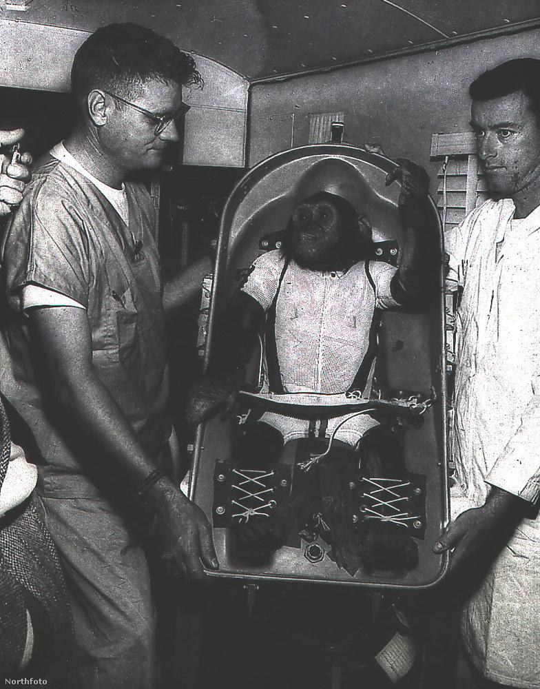 1961 januárjában hagyta el a Földet.