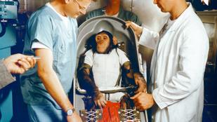 Elképesztő fotók kerültek elő a '60-as években az űrbe kilőtt majmokról