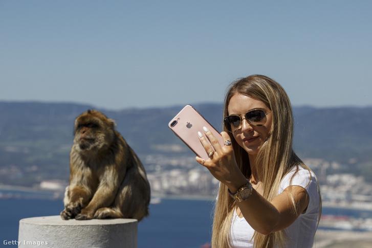 Képünk illusztráció. Egy turista Gibraltáron szelfizik egy majommal 2017 áprilisában.