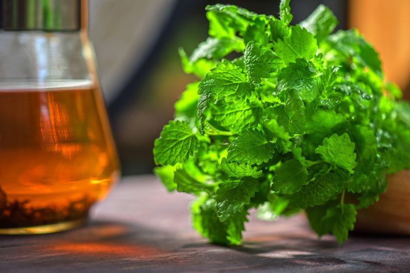 A citromfűtea az egyik leghatékonyabb nyugtató, alvási nehézségek ellen fogyasztandó tea, mely idegfeszültség, ideges szívpanaszok és stressz esetén különösen hatékony lehet.