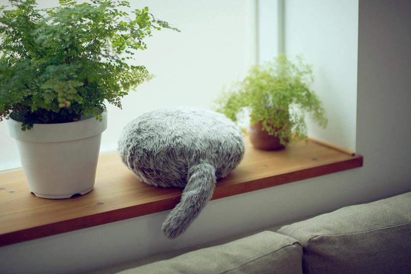 robot-macska