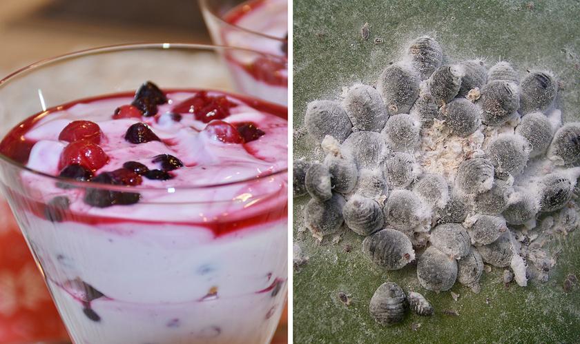 A porított bíbortetveket joghurtokban, cukorkákban és üdítőkben is felhasználják az élénkpiros árnyalat eléréséhez, viszont a mesterséges társaikkal ellentétben káros hatásuk sincs.