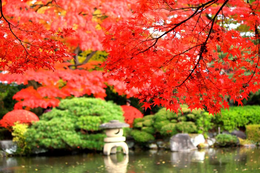 Akárcsak a Sakura-ünnepet, a juharfák színének változását is milliók várják. Októberben Yamagata északi tartományában a hegyek, a forró vizű források és a buddhista templomok közt ilyen csoda vár.