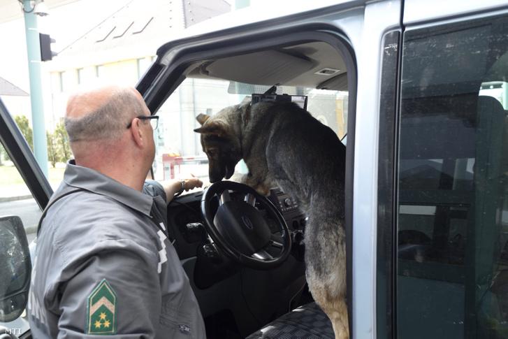 Pénzügyõr vizsgál át egy személygépkocsit keresõkutyájával a röszkei autópálya-határátkelõhelyen