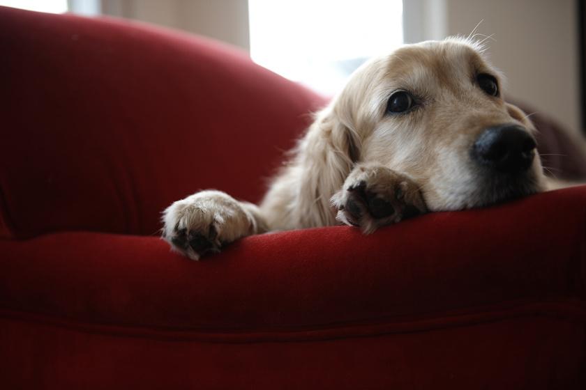 kutya (2)