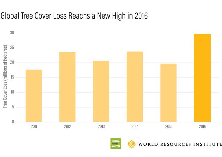 A fával borított területek csökkenése az elmúlt években