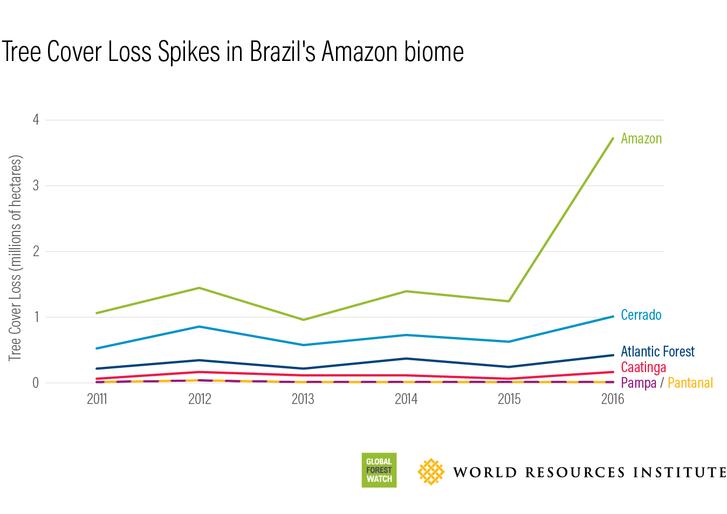 Az amazonasi őserdő favesztesége kiemelkedik más erdős területekhez képest