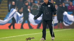 Beállt focizni egy mókus a Manchester City meccsén