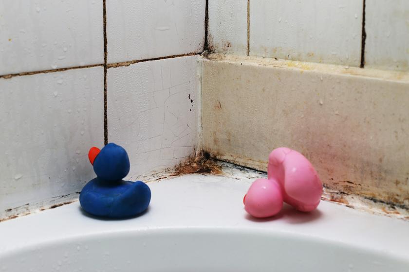 A fürdőszobai penész ellen hatásos a só. Csak töröld át az érintett felületet enyhén nedves szivacsra szórt, vastag sóréteggel.