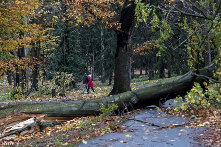 Kidőlt fák a cseh fővárosban Prágában a Stromovka park.