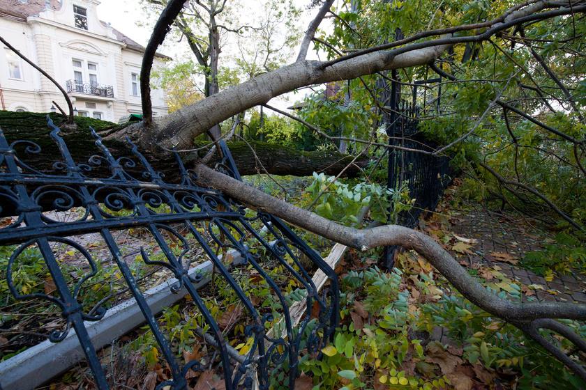 A legerősebb széllökéseket a Balatonnál regisztrálták, Siófokon 131 kilométer per órás széllökést is mértek. A viharos szélben fák dőltek ki.