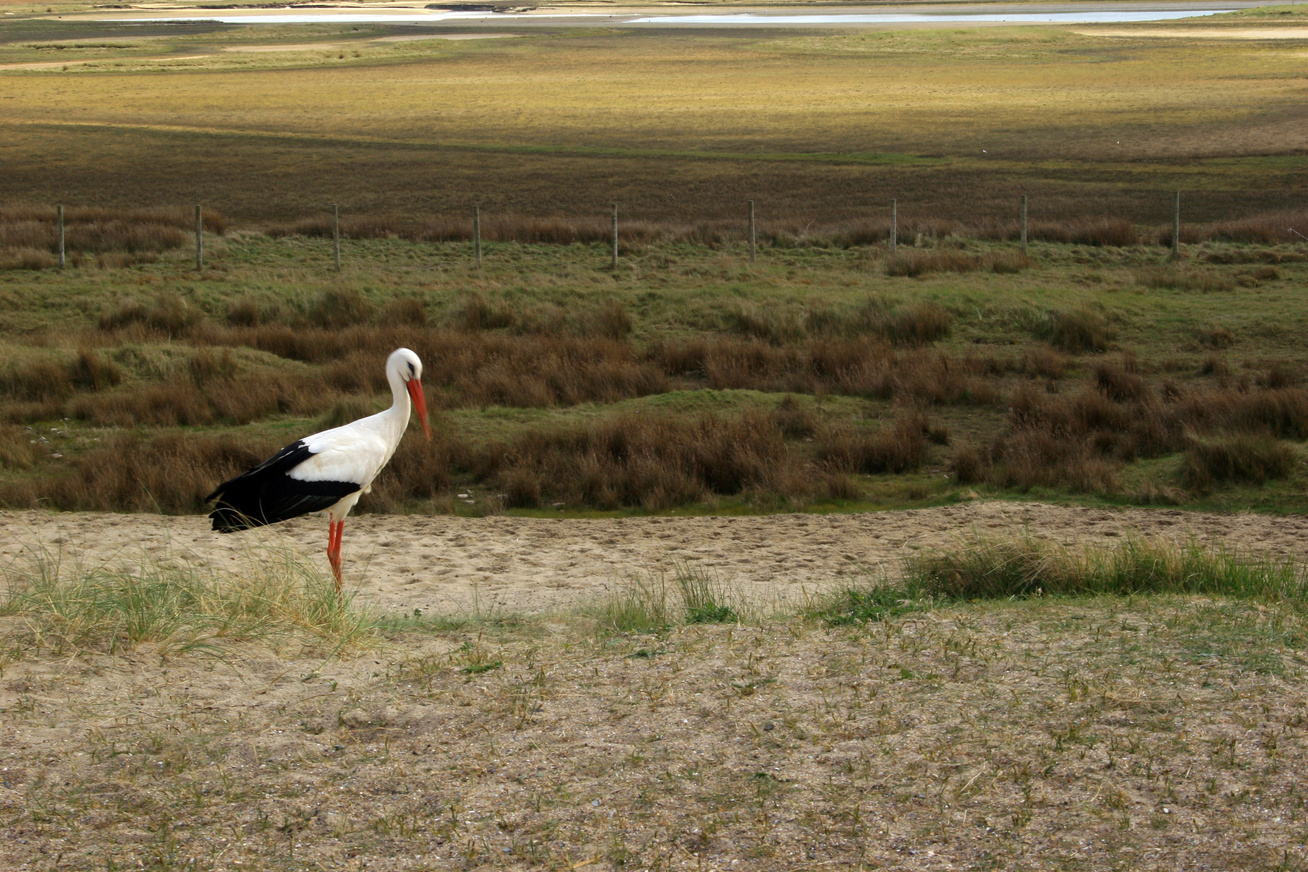 gólya vándorlás