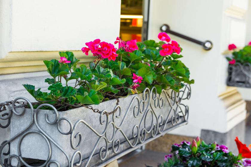 muskatli-balkon