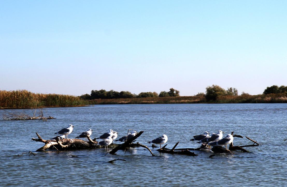 Trei Lezere-tó, nyáron teljesen benövi a zöld, és tele van sirállyal