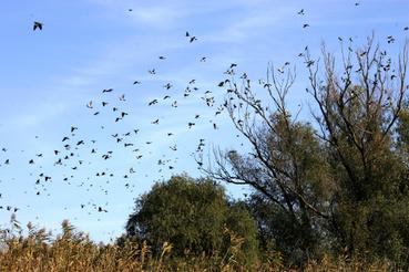 Vadgalambok tízezerei élnek a deltában