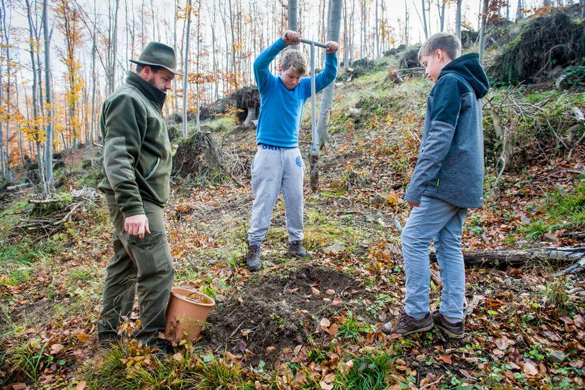Diákok fát ültetnek az Ipoly Erdő Zrt. területén, a Nógrád megyei Diósjenő közelében 2017. november 6-án.