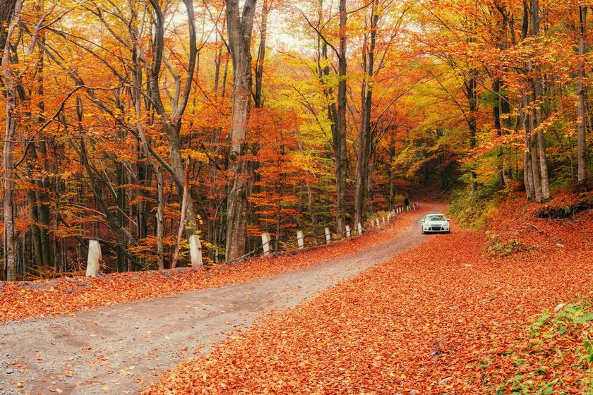őszi teendők