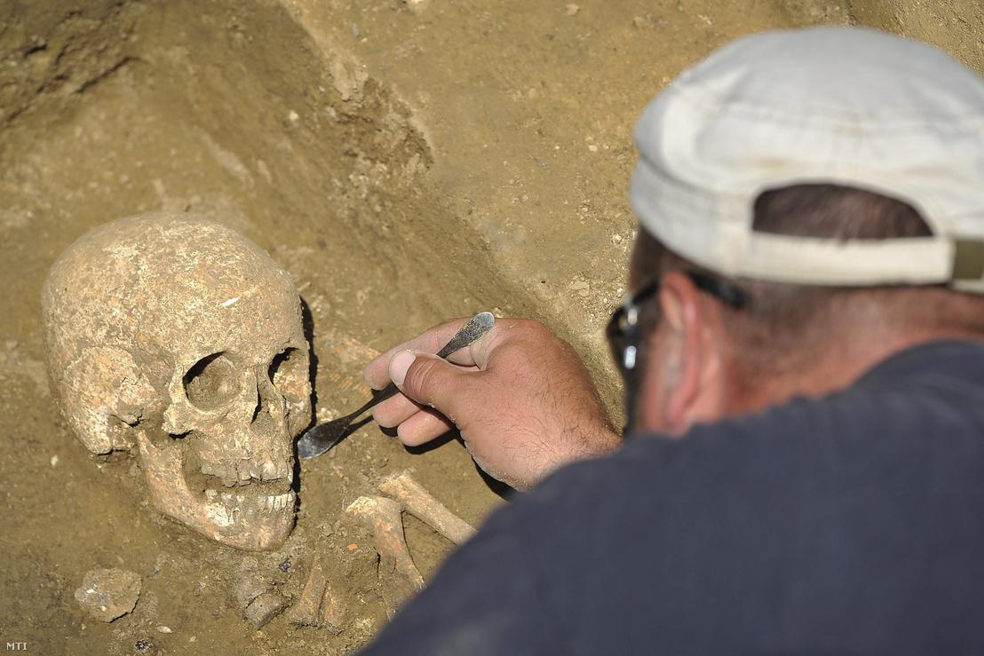 Koponyát tár fel egy régésztechnikus az épülő M4-es autópálya nyomvonalán zajló régészeti feltáráson Berettyóújfalu térségében 2015. június 1-jén. Az ásatást végző Salisbury Kft. régészei egy kétszáz sírból álló gepida temetőt tártak fel.