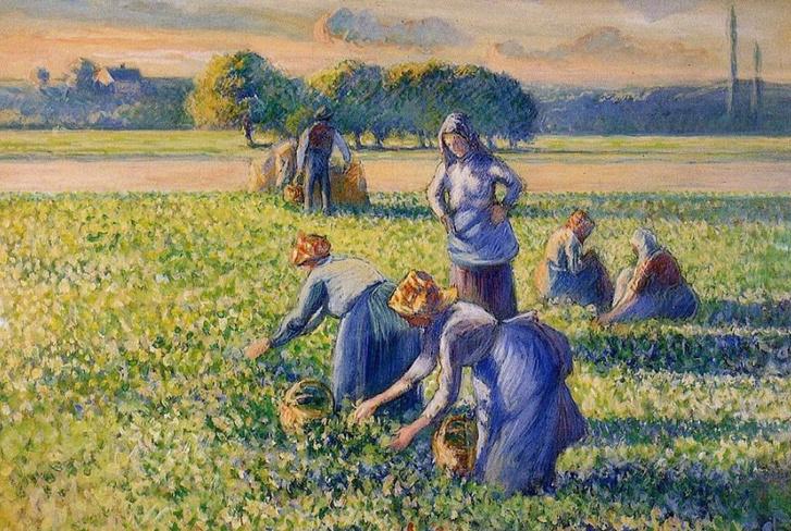 Pissarro - Borsószedés (La cueillette des pois) 1887