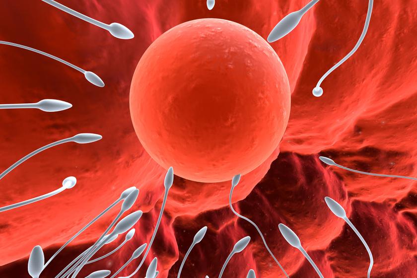 spermium-petesejt