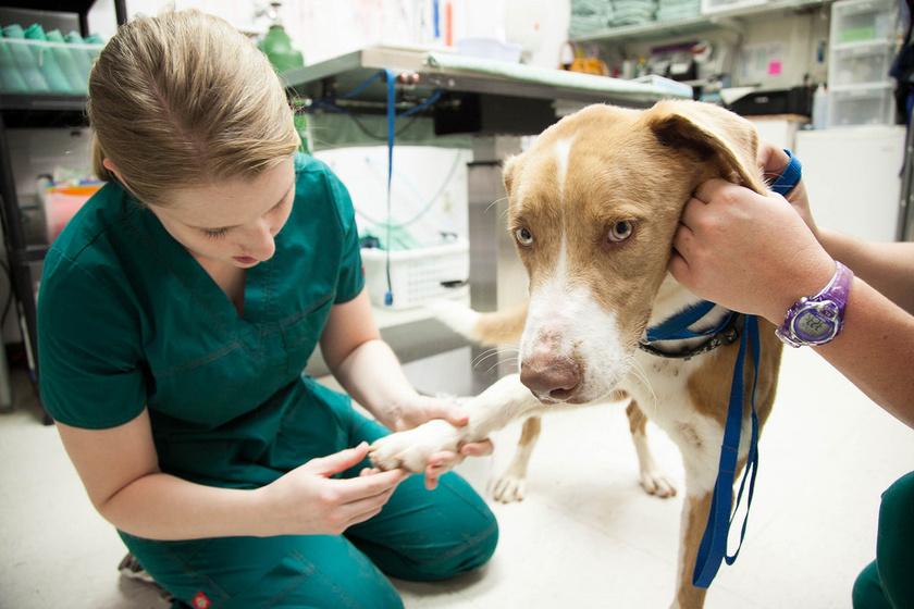állatorvos kutyával