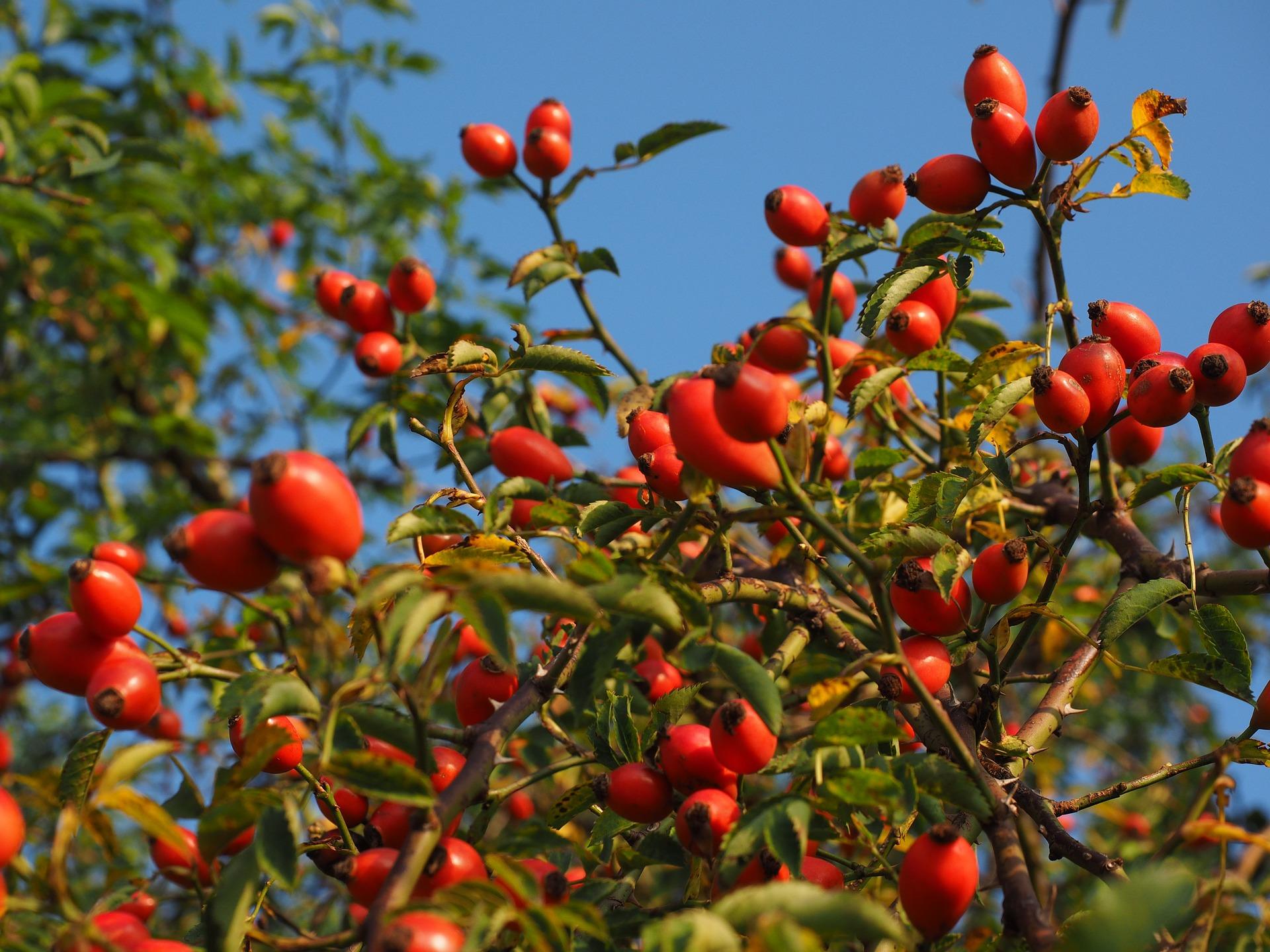 Melyik vitaminban gazdag növény van a képen?