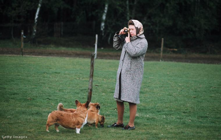 Térjünk át most másik szenvedélyére: a kutyatartásra