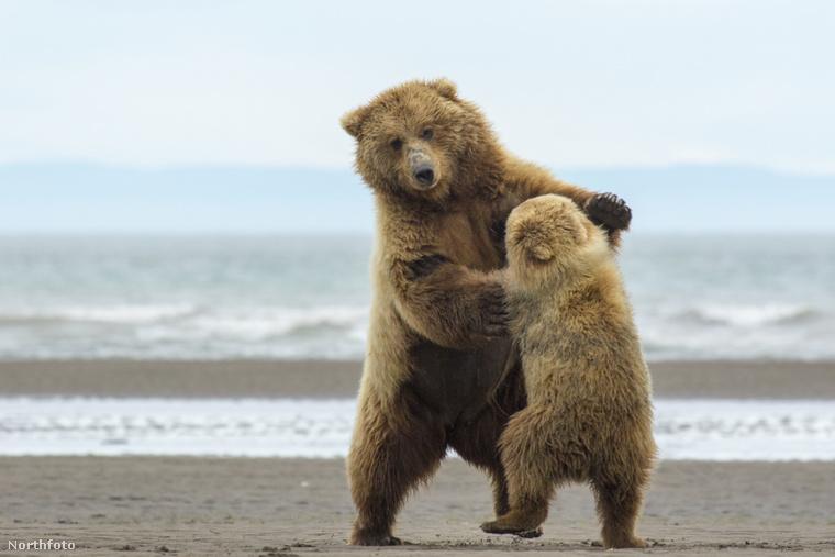 Ezeknek a medvéknek semmi közük nincs az illető úr személyazonosságához, csak térelválasztónak tettük őket ide.