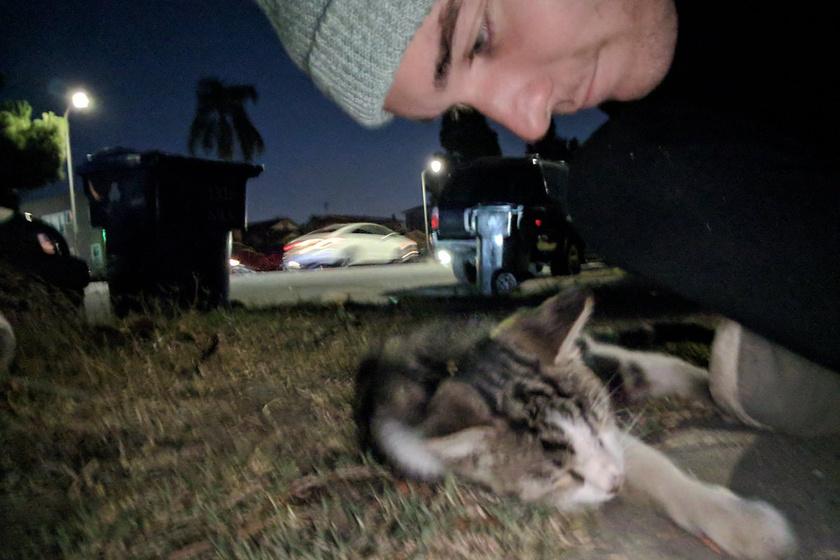A macska egy esti séta során csapódott Connorhoz, és egyikük sem tudott megszabadulni a másiktól.