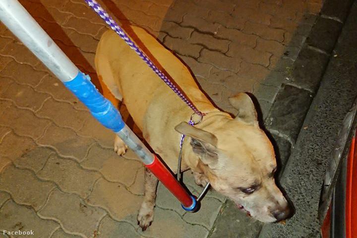 A fenti kutya tépett szét egy tacskót október végén