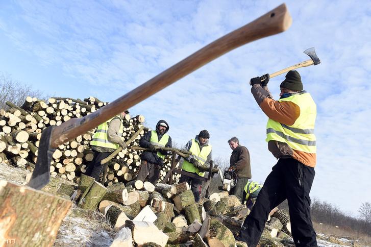 Közmunkások aprítják a fát Dányban 2017. január 11-én.