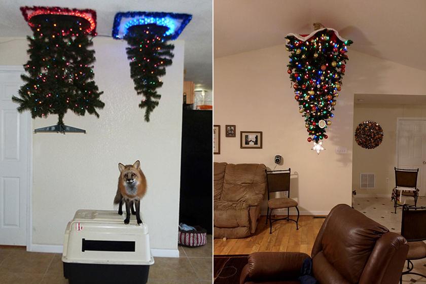 A plafonra szerelt karácsonyfa az egyik legérdekesebb megoldás, mindegy, hogy kutyája, macskája vagy éppen rókája van az embernek.