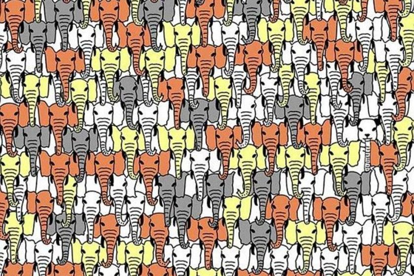 Hol van a panda az elefántokkal teli képen? Az ember azt hinné, hogy könnyű, de a látszat sokszor csal.