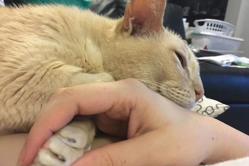 4 jamie menhelyi cica