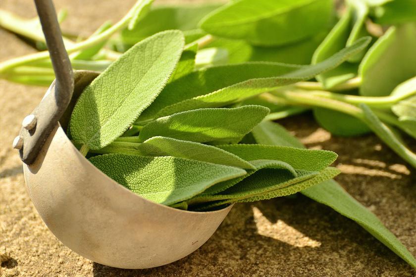 A zsálya erős gyógynövény, gyulladáscsökkentő, összehúzó hatást fejt ki a hajszálerekre. Főzz belőle teát, négy evőkanálnyit tegyél két deci vízbe, és borogatásként használd az arcodra.
