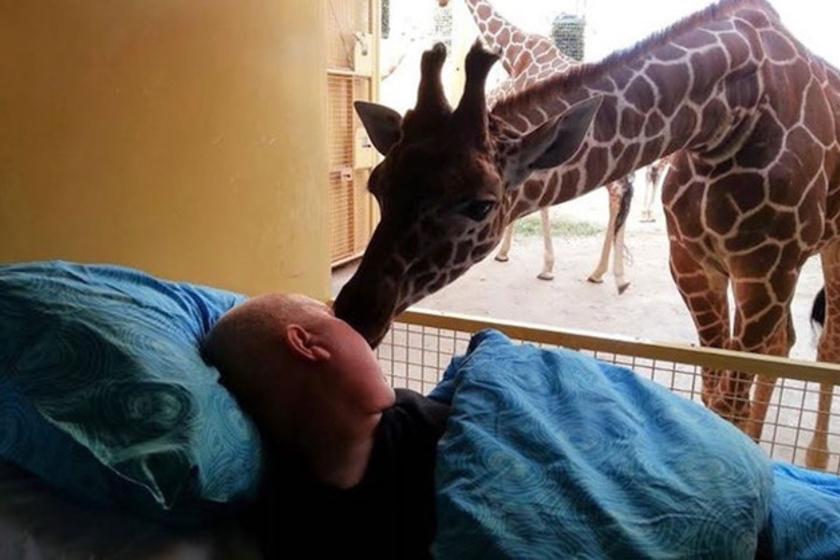 Mario azt kérte, hogy még utoljára láthassa és megsimogathassa kedvenc állatkerti zsiráfját. A Make-A-Wish alapítvány teljesítette is a vágyát: a kép mindent elmond az állat és a férfi kapcsolatáról.
