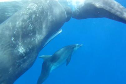 bálnák társkereső oldal