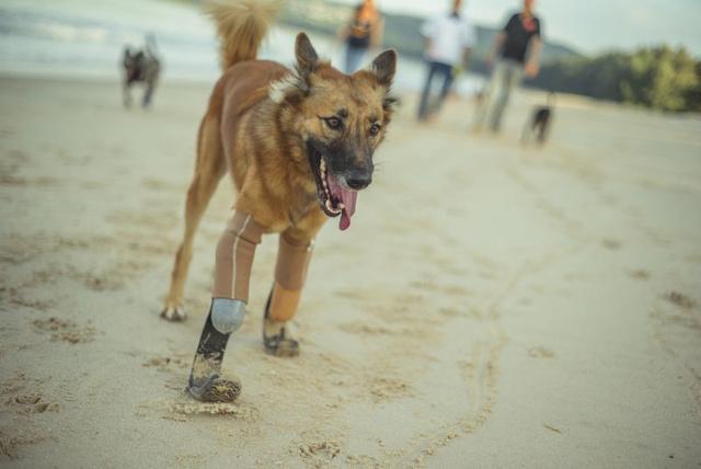 Fotó: Soi Dog Foundation