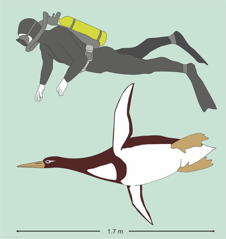 tk3s swns giant penguin 01