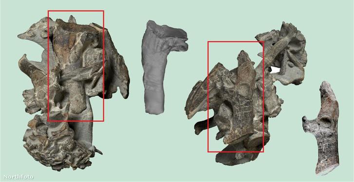 A most felfedezett csonttöredékek